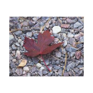 Lone Maple Leaf Canvas Print