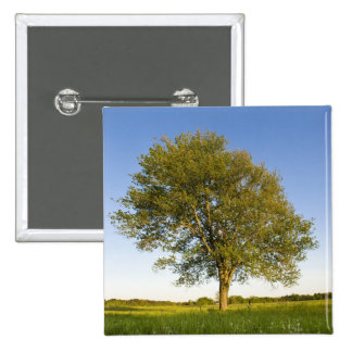 Lone maple tree in hay field at Raymond Farm, 2 Inch Square Button