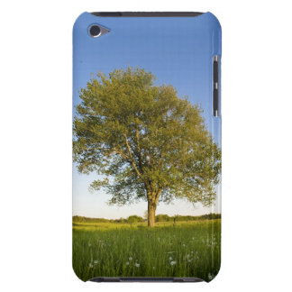 Lone maple tree in hay field at Raymond Farm Barely There iPod Case