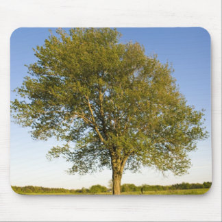 Lone maple tree in hay field at Raymond Farm, Mouse Pad