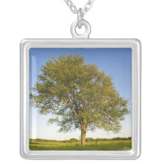 Lone maple tree in hay field at Raymond Farm, Silver Plated Necklace