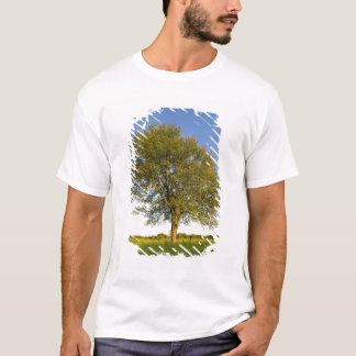 Lone maple tree in hay field at Raymond Farm, T-Shirt