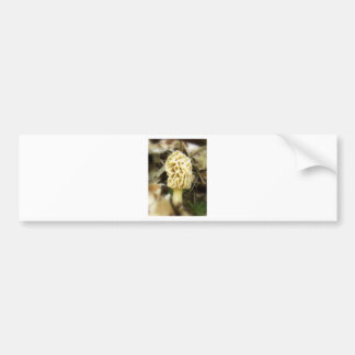 Lone Morel Bumper Sticker