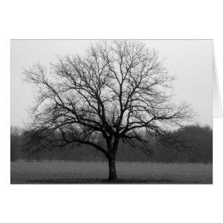 Lone Oak Card