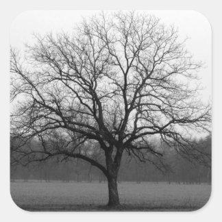 Lone Oak Square Sticker