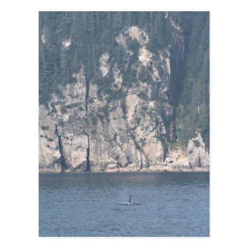 Lone Orca scene Postcard