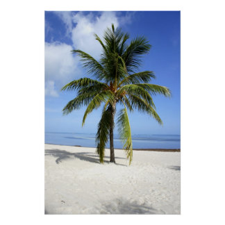 Lone Palm Poster