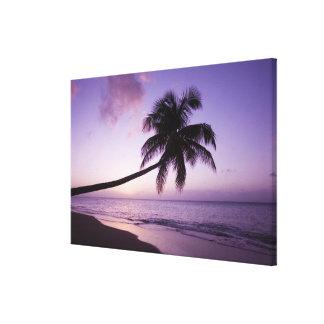Lone palm tree at sunset, Coconut Grove beach 2 Canvas Print