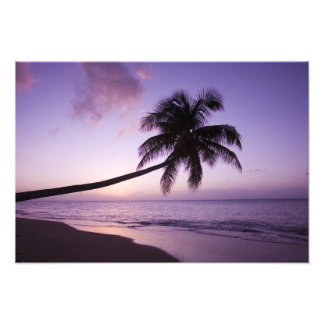 Lone palm tree at sunset, Coconut Grove beach 2 Photo Print