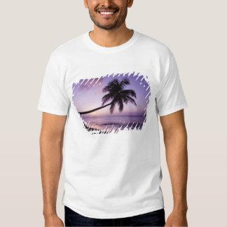 Lone palm tree at sunset, Coconut Grove beach 2 Tees