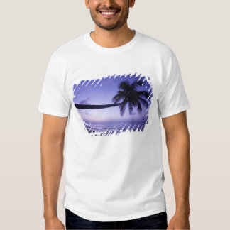 Lone palm tree at sunset, Coconut Grove beach 3 T-Shirt