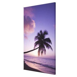 Lone palm tree at sunset, Coconut Grove beach Canvas Print