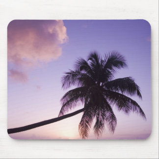 Lone palm tree at sunset, Coconut Grove beach Mouse Pad