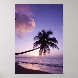 Lone palm tree at sunset, Coconut Grove beach Print