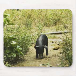 Lone Pig (2) Mouse Pad