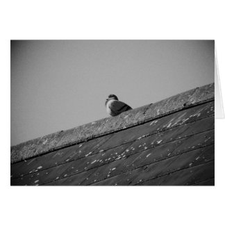 Lone Pigeon on a Roof Greeting Card