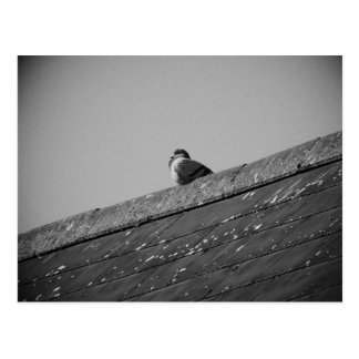 Lone Pigeon on a Roof Postcard