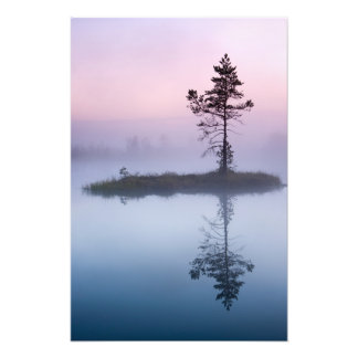 Lone pine tree in the mist photo art