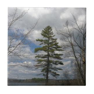LONE PINE TREE TILE