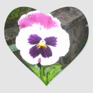 Lone Purple and White Pansy Heart Sticker