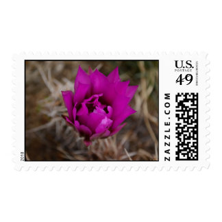 Lone Purple Cactus Flower Postage Stamps