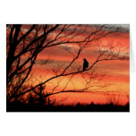 Lone Raven Calling Greeting Card
