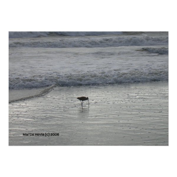 Lone Sandpiper at Watsonville Beach
