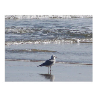 Lone Seagull Post Card
