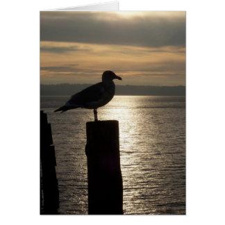 Lone Seagull Sympathy Card