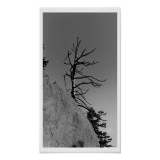 Lone Sky Tree, digital photo by Mark Easton Poster
