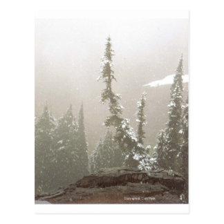 Lone Snow Covered Fir Tree Mt Rainier Paradise Art Postcards