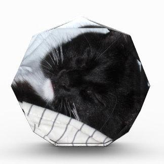 Lone Star - Kitty Nap Acrylic Award