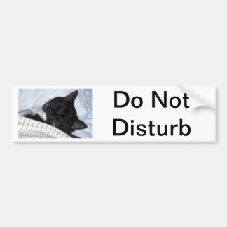 Lone Star - Kitty Nap Car Bumper Sticker