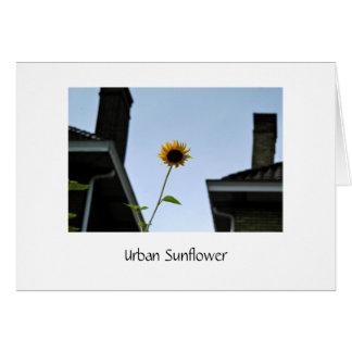 Lone Sunflower Amidst City Buildings Card