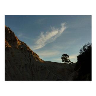 Lone Torrey Pine California Sunset Landscape Postcard