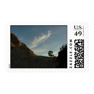 Lone Torrey Pine California Sunset Landscape Stamp