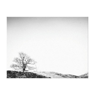 Lone Tree Against the Skyline Canvas Print