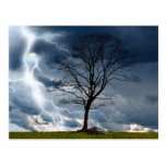 Lone tree and lightning post card