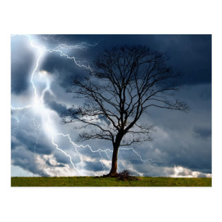 Lone tree and lightning postcard