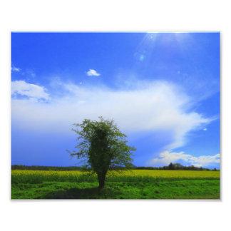 Lone tree big sky! photo print
