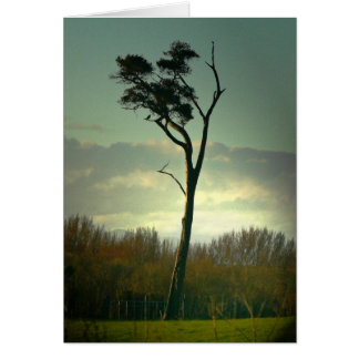 Lone Tree Cards