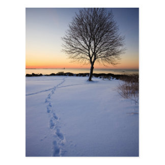 Lone tree in fresh snow at New Castle Common Postcard