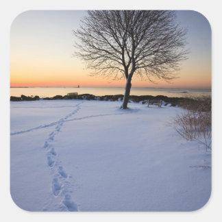 Lone tree in fresh snow at New Castle Common Square Sticker
