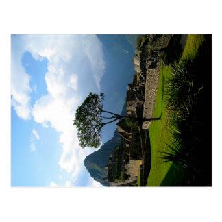 Lone Tree in Macchu Picchu Postcard