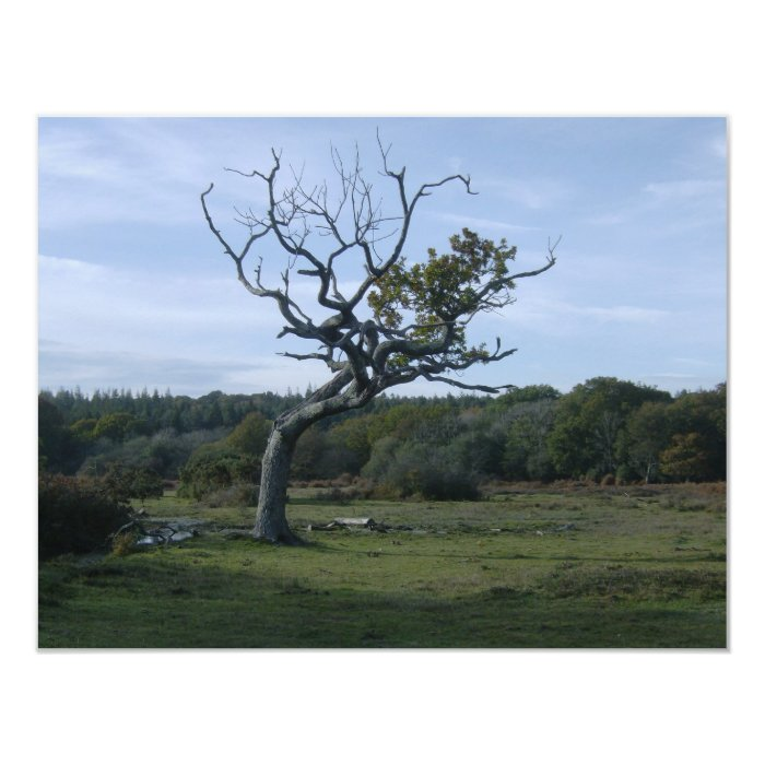 Lone tree in New Forest Card