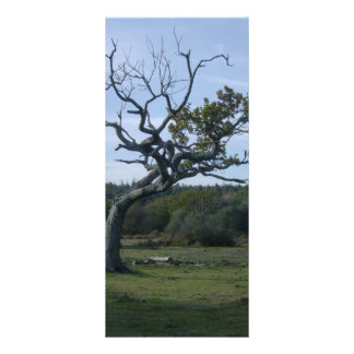 Lone tree in New Forest Personalized Rack Card