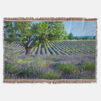 Lone tree in purple field of lavender throw