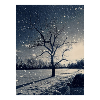 Lone tree in winter snow poster