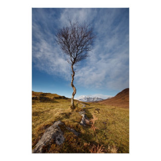 Lone Tree, Isle of Skye, Scotland Poster