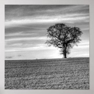 Lone Tree Poster Print